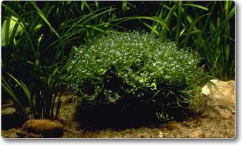 Plantas saudáveis ajudam a preservar a qualidade da água