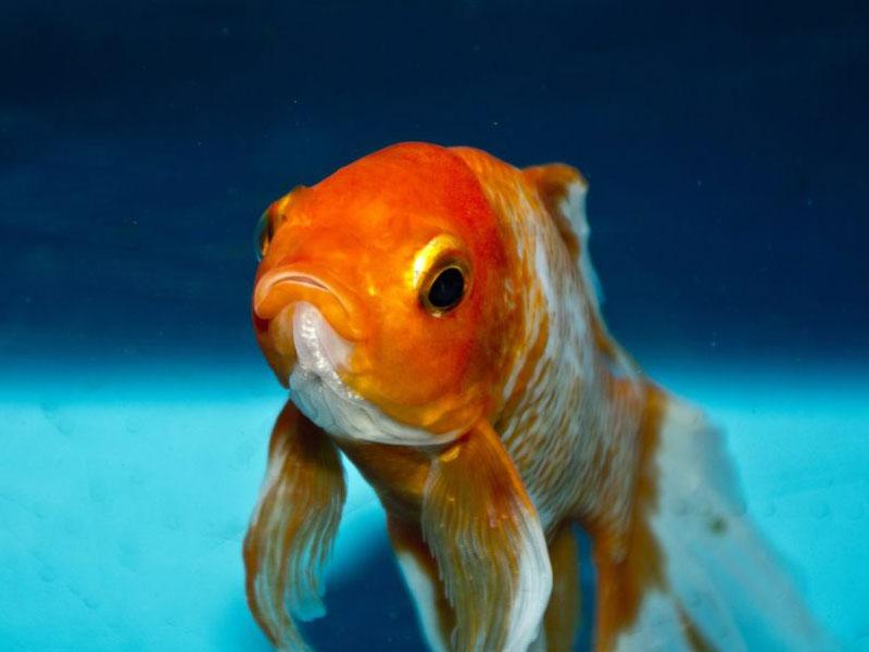 A utilização da doxiciclina na aquariofilia