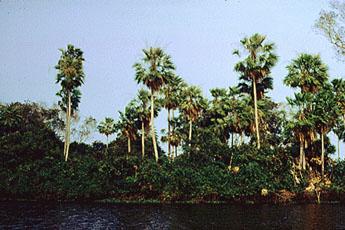 Rio Zaire