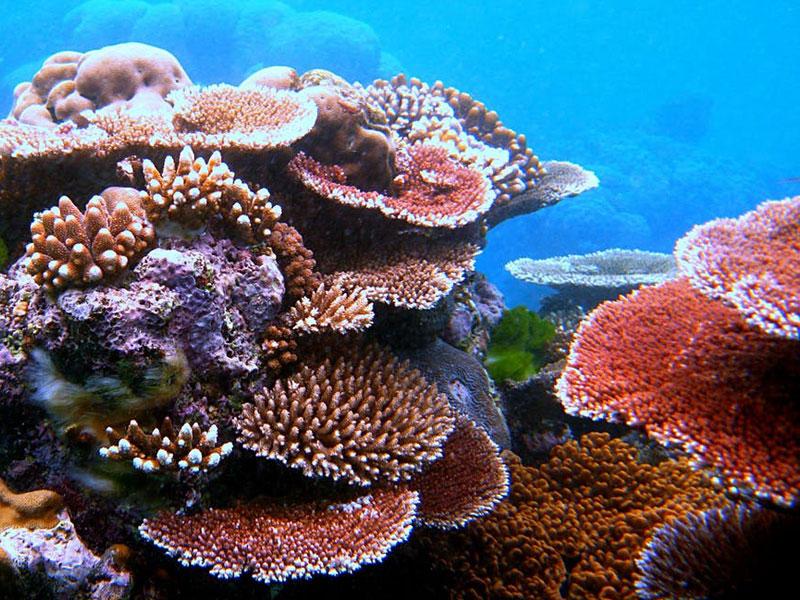 A grande barreira de coral abrange mais de 2.800 recifes individuais