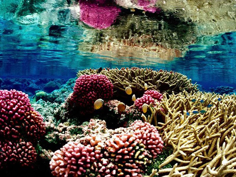 A formação laminar dos corais nunca demora menos de 800 anos