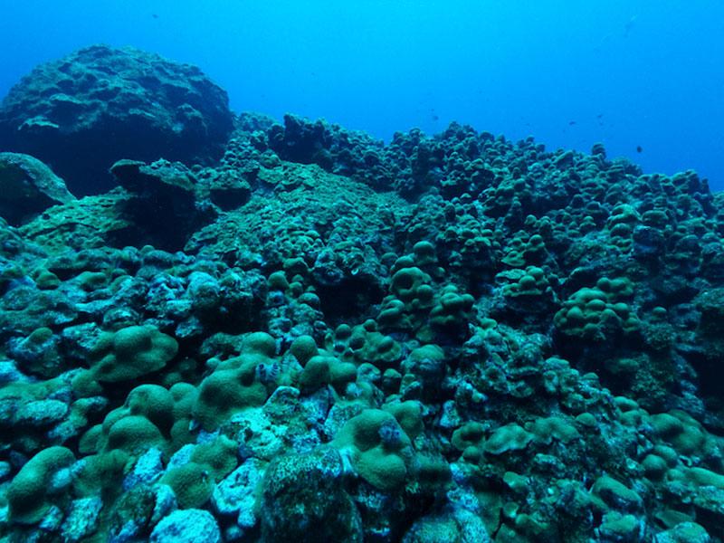 Em causa estão 34 por cento das espécies com habitats mais restritos