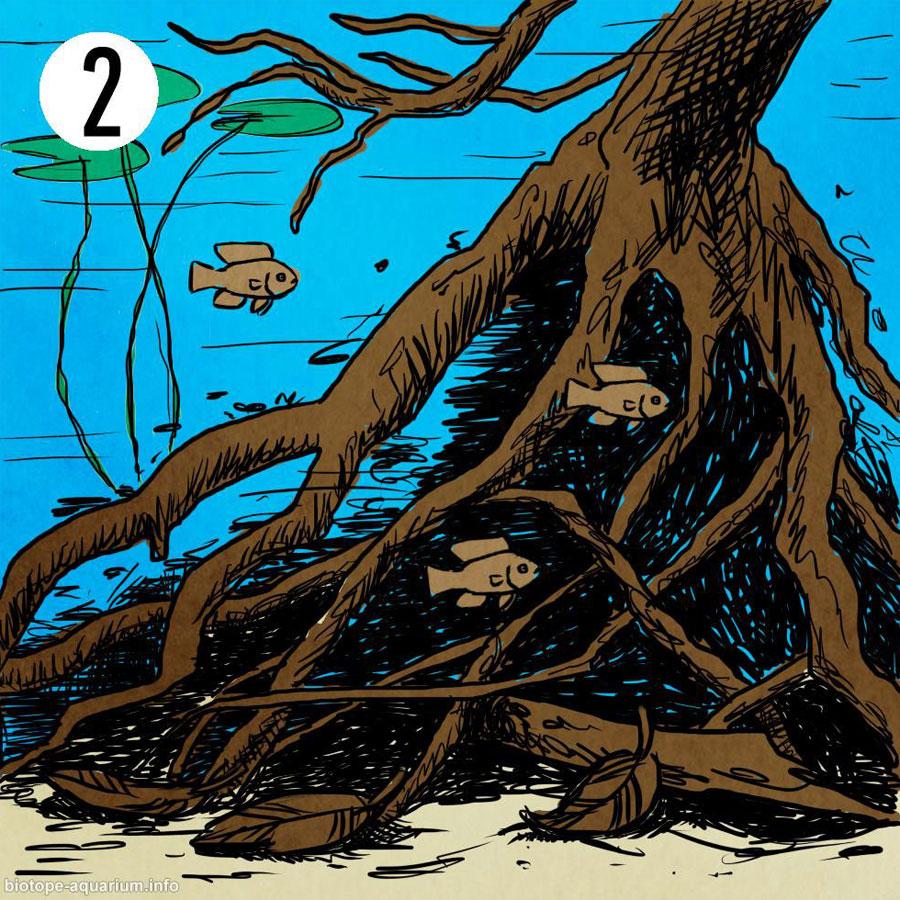 Um biótopo de margem cheio de troncos e folhas