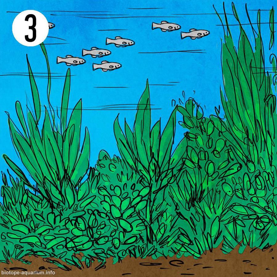 Um biótopo de fundo raso e coberto de plantas aquáticas