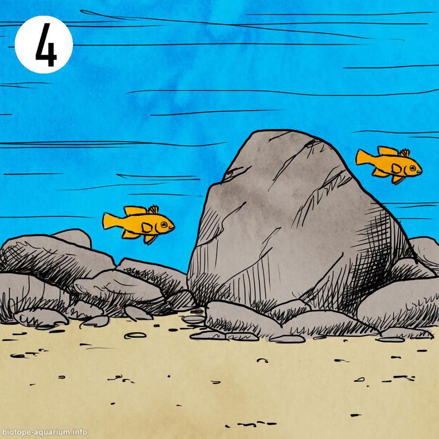Um biótopo com areia e pedras com uma dureza alta