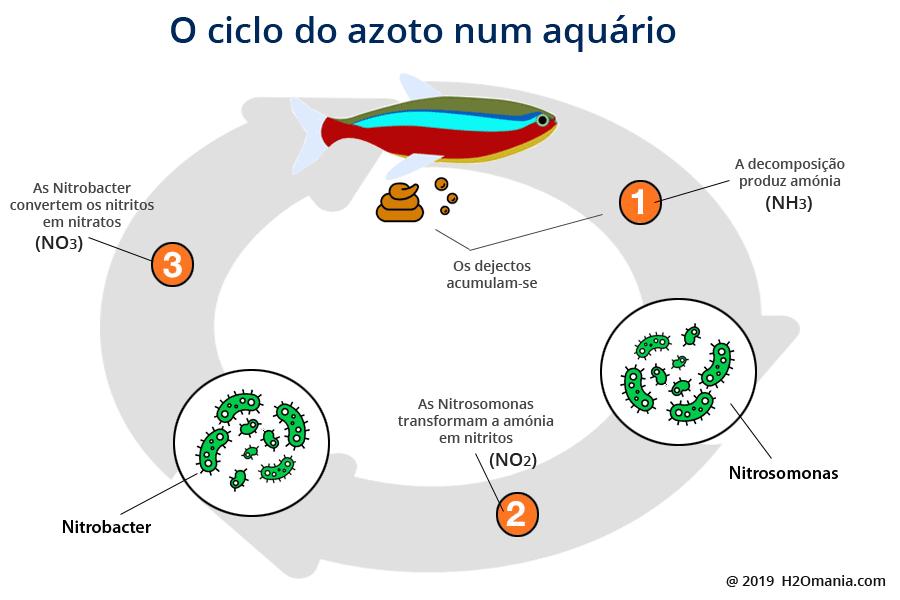 O ciclo do azoto num aquário