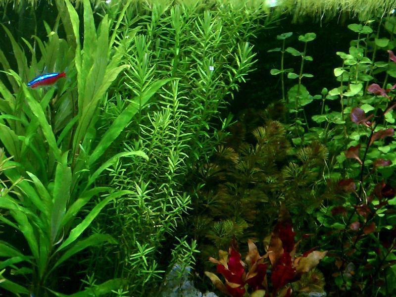 Prestando atenção aos detalhes é fácil conservar o aquário saudável