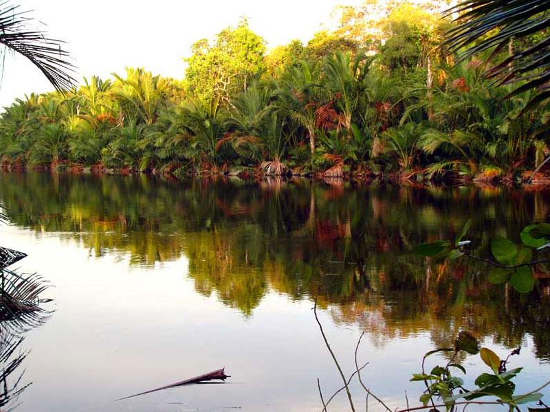 Biótopo no sultanato de Brunei, no norte da ilha de Bornéu